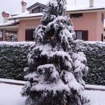Montebello della Battaglia 2011_02